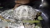 男子捡到一只金乌龟,中了25张彩票村民求好运!