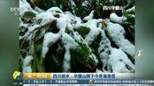 立冬后 四川峨眉山迎来首场大雪