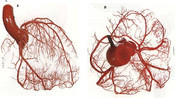 14.从肺泡到毛细血管的氧气流动