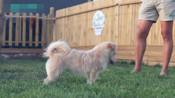 高加索犬训练方法 专业训犬 德国牧羊犬怎样训练
