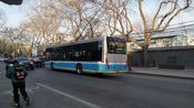 北京公交111路 动物园—新开胡同