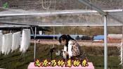 青海大学生回乡创业,想把家乡马铃薯粉条推广出去,感谢支持!