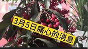 3月5日,武汉传来个痛心的消息,希望疫情早点结束,一起来听听吧