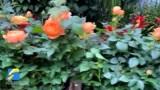 年味渐浓 日照迎宾路花卉市场即将进入购销旺季