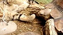 cat vs tortoise(http://www.hzylqc.com)arm (cat vs turtle)