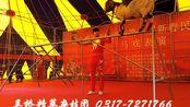 吴桥杂技 马戏表演 驯羊驯猴 小山羊过独木桥