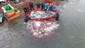 这一网至少有几千斤鱼,整条河的鱼被一网打尽了!