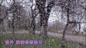 """免费视频 听雨(作者:张慧敏 朗诵:秋水伊人 视频制作:山泉))-[""""IKU""""]"""