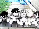 搞笑动物!一群可爱的狗狗www.025jb.com