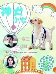 神犬小七 DVD版第1部