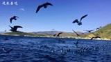 旅游攻略,大理洱海之旅,他的风景和名字一样美!