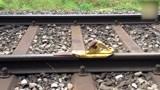 车行天下一路有你:看看印度火车是如何刹车的,反正我是没忍住笑了
