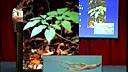 67《中药学》补虚药概述、补气药概述及药:人参(一)-0005[www.163sports.com]