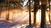 柔和的日光下夕阳的余辉挥洒在每个人身上
