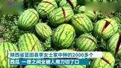 太缺德!陕西蓝田2000多个西瓜被砍烂,网友-必须找出凶手