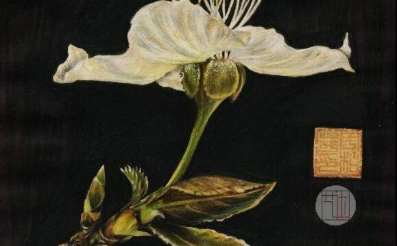 【彩铅】一树梨花压海棠.,画出来的唯美