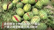 2000个西瓜遭刀砍,农妇:良心不会痛吗?