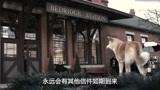 忠犬八公的故事:小八依旧每天在车站门口,等待着帕克