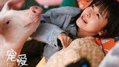宠爱:爱我还是它?钟汉良养猪被杨子姗发现,选择女友还是猪?