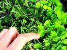 比含羞草还要害羞的植物www.qsjm8.com