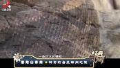 """普陀山不受台风侵袭,台风来临水中便有一两百米长""""蟒蛇""""出没"""