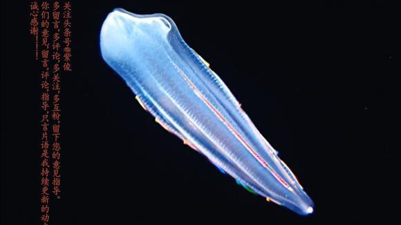 """科技探索千米深海""""外星生物""""惊艳人类触觉之深海幽灵阿凡达之海"""