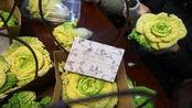 """【南京】 南京农业大学""""玫瑰白菜""""亮相 能吃能看惹人眼"""
