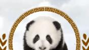 你了解咖啡吗?熊猫教你识咖啡!咖啡小课堂第一集(正式版)-时尚-高清完整正版视频在线观看-优酷