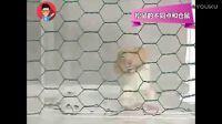 花鼠vs仓鼠