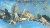 春天农村的小河沟里小龙虾泛滥,但是这样的小龙虾你敢吃吗-精彩美食合集20180622-L涵养生堂