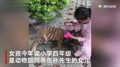 9岁女孩遛老虎,其父:老虎还小,没有攻击性