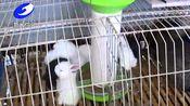 联播快讯:舞钢市首届长毛兔论坛举行