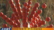 """视频:北京颐和园春节""""宫廷庙会""""准备就绪"""