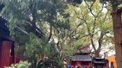 普陀山.普济禅寺