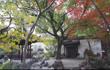 四个多世纪的存续——豫园记忆