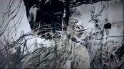《妖猫传》白龙杨贵妃唯美混剪,刘昊然穿着羽毛衣服真是帅气!