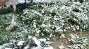 湖北仙桃农村封村22天,终于下雪了,10多年终于见到这么大雪
