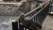 颐和园的松鼠
