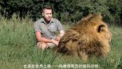 丛林之王看见游客过来,竟做出此事,游客吓坏了!