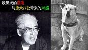 秋田犬的没落与忠犬八公带来的兴盛