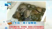 [生活·帮]巴西龟随意放生引发危险