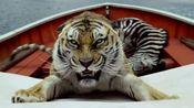 少年派的奇幻漂流:老虎为了捉老鼠,费尽心思,大佬,你不是猫!