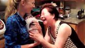 宠物视频 没有什么能比收到一条蝴蝶犬来的让人开心了