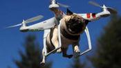 未来飞机发展,人类就差插上翅膀了!