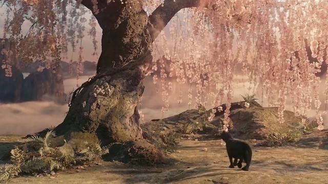 妖猫传:黑猫为杨玉环复仇