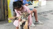 人胆大!9岁女孩牵绳遛老虎 每天陪它散步捉迷藏