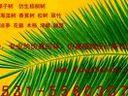 白山仿真植物_0531-55603077_仿真椰子树_仿真棕榈树www.fangzhenshu.com