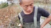 洪湖小肖直播录像2019-11-16 12时35分--14时3分 隔壁乡镇资源开发