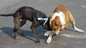 狗狗街头拉帮结派,一言不合就开干,太霸气了!