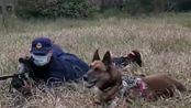 消防搜救犬见过这么萌的翻身吗,和主人配合的太默契了,农村的土狗比不了!